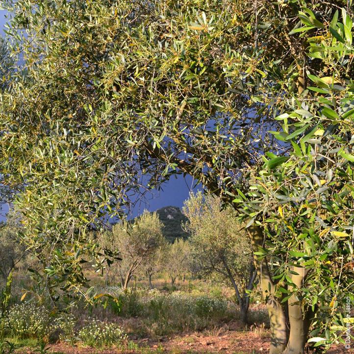 oliverai jasson village club la londe les maures